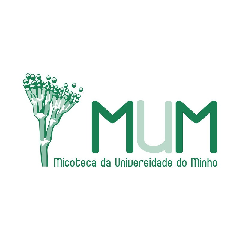 PT_ MUM_1